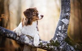 壁紙のプレビュー 犬、木