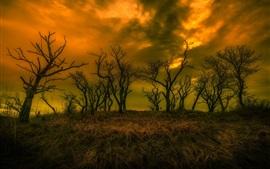 Crépuscule, herbe, arbres, nuages, automne