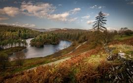 Inglaterra, Cumbria, lago, árboles, otoño