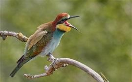 European bee-eater, beak, bird