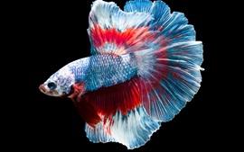 Рыба, цвета, черный фон