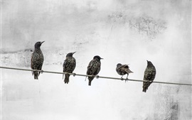 Five birds standing on wire