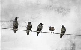 미리보기 배경 화면 전선에 서있는 다섯 마리의 새들.