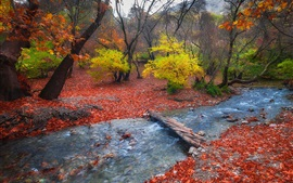 Preview wallpaper Foothills, trees, autumn, bridge, stream