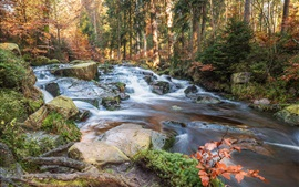 Forest, stones, creek, autumn, Germany
