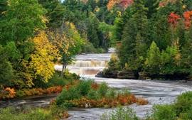 Bosque, árboles, río, corriente