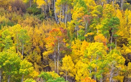 Preview wallpaper Forest, trees, yellow and green leaves, autumn