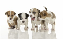 Preview wallpaper Four puppies, white background