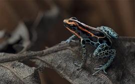 Preview wallpaper Frog, leaf