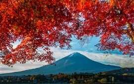 Preview wallpaper Fuji Mount, trees, red leaves, autumn, Japan