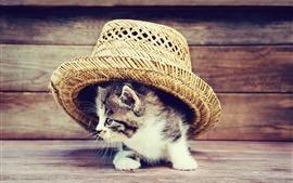 Preview wallpaper Funny kitten, hat
