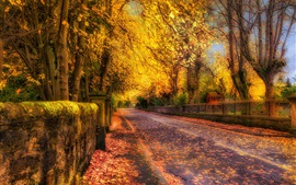 Or automne, route, arbres, feuilles jaunes, style HDR