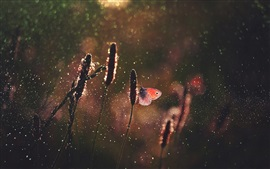 Трава, бабочка, дождь