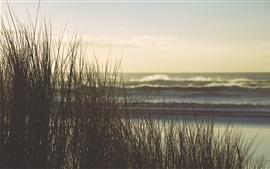 Grass, sea, dusk