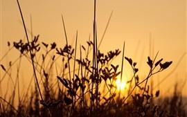 Hierba, puesta de sol, luz de fondo