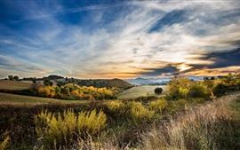 Hierba, árboles, colina, nubes, otoño