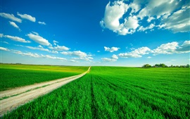 Preview wallpaper Green fields, path, blue sky, clouds, summer