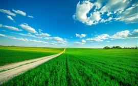 Campos verdes, caminho, céu azul, nuvens, verão
