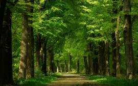 Зеленый лес, деревья, путь
