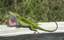 Preview wallpaper Green lizard climbing