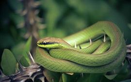 Green snake, thorn