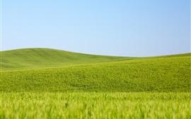 Campos de trigo verde, cielo azul