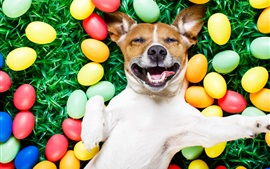 Preview wallpaper Happy dog, colorful eggs, grass