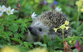 Preview wallpaper Hedgehog, grass, wildflowers