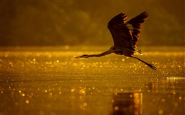 Preview wallpaper Heron flight, lake, dusk