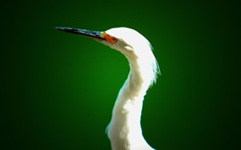 Preview wallpaper Heron, neck, beak, head, eyes, green background