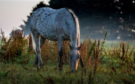 Preview wallpaper Horse eat grass, dusk