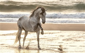 Preview wallpaper Horse walk in the beach, water splash, sea