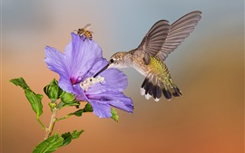 Preview wallpaper Hummingbird flight, purple flower, bee