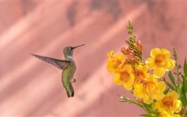 Preview wallpaper Hummingbird flight, yellow flowers