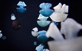 미리보기 배경 화면 해파리, 흰색과 파란색, 바다