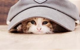 Kitten olha para fora de um chapéu