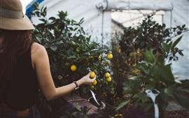 Кумкват, фрукты, рука