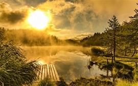 Lago, árboles, niebla, amanecer, mañana, muelle