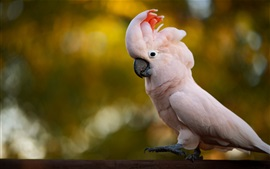 Preview wallpaper Light pink cockatoo