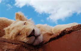Preview wallpaper Lion sleeping, blue sky