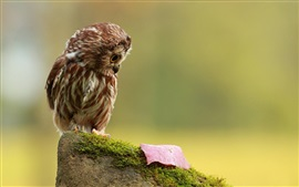 Preview wallpaper Little owl look at a leaf