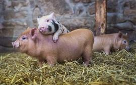 壁紙のプレビュー 小さな豚