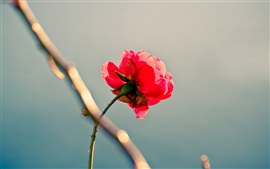 Preview wallpaper Lonely red rose, stem