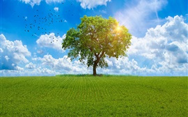 Preview wallpaper Lonely tree, fields, birds, sunshine, summer