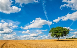 Preview wallpaper Lonely tree, fields, clouds, sky