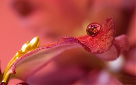 Preview wallpaper Macro photography, one water drop on the petal