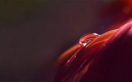 Preview wallpaper Macro photography, petal, water drop