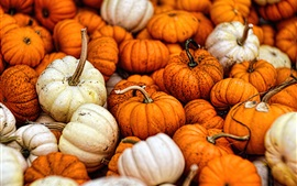 Preview wallpaper Many pumpkin, vegetable, harvest