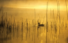 Утро, озеро, трава, утка, туман