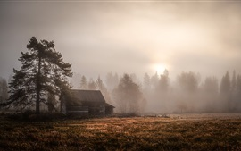Preview wallpaper Morning, trees, hut, fog